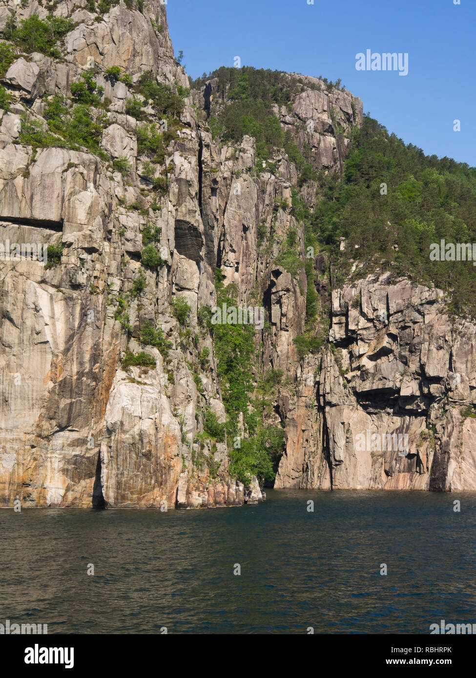 A one day fjord cruise in Lysefjorden east of Stavanger Norway, daring trees and steep and rugged mountainsides straight into the fjord - Stock Image