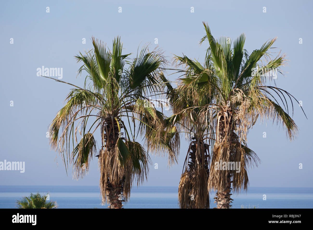View over palm trees to the ocean Stock Photo