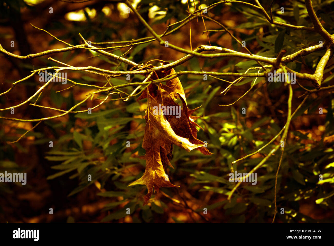 Branches and leaves - Stock Image