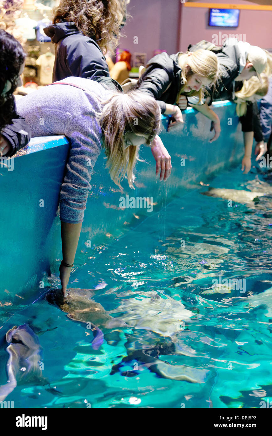 People leaning in to touch the rays inside Ripley's Aquarium of Canada, Toronto, Ontario - Stock Image