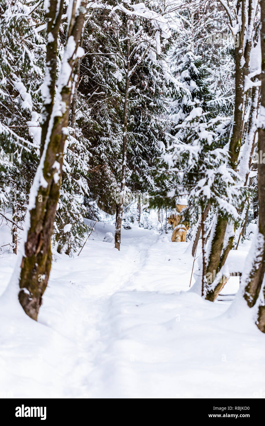 Beautiful trail in the snow covered russian forest Stock Photo