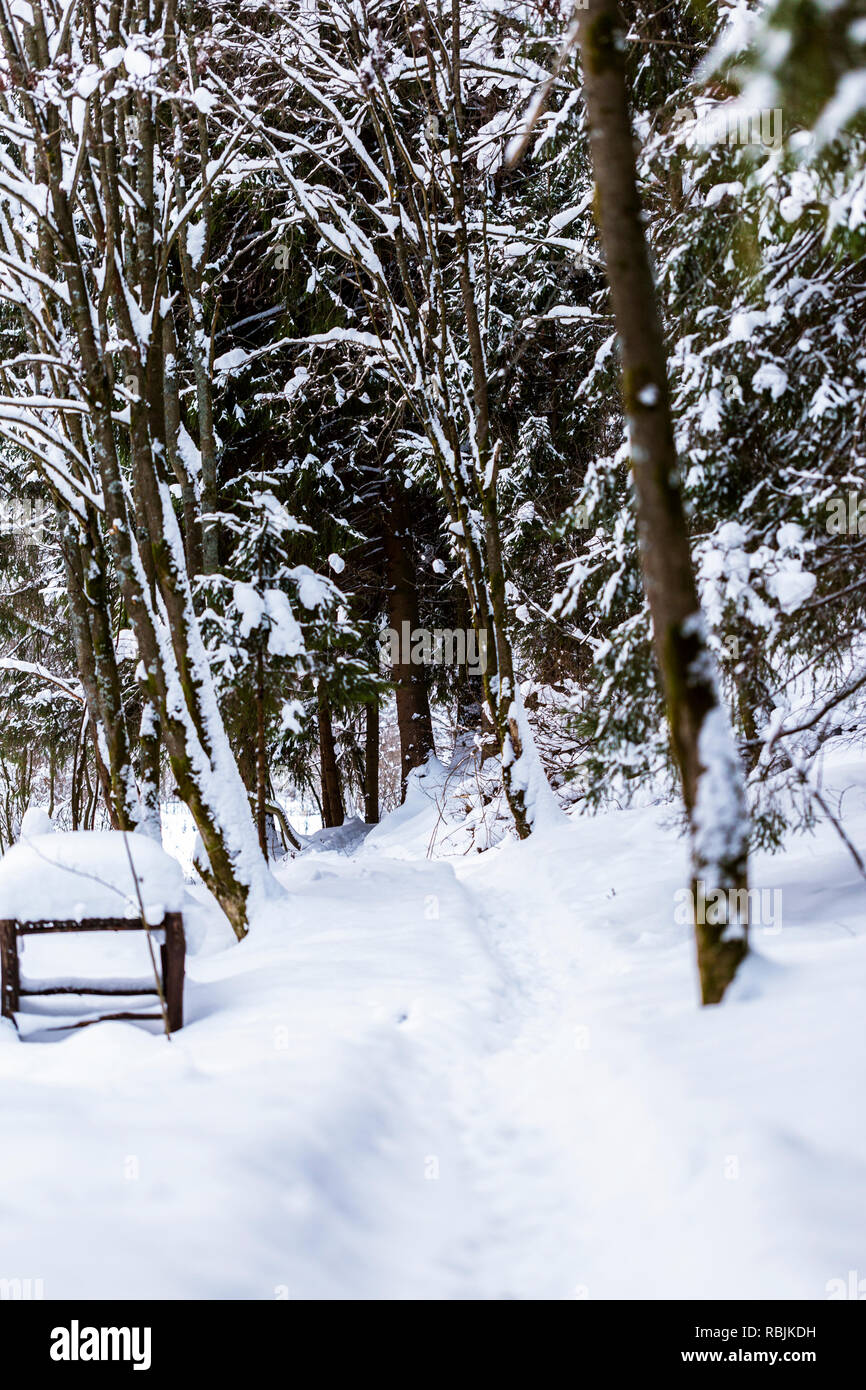 Picturesque trail in the snow covered russian forest Stock Photo