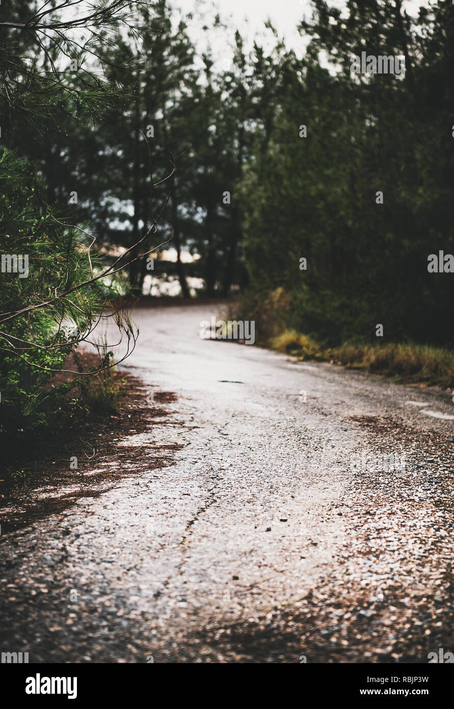 Moody road in the mountain wood between trees - Stock Image