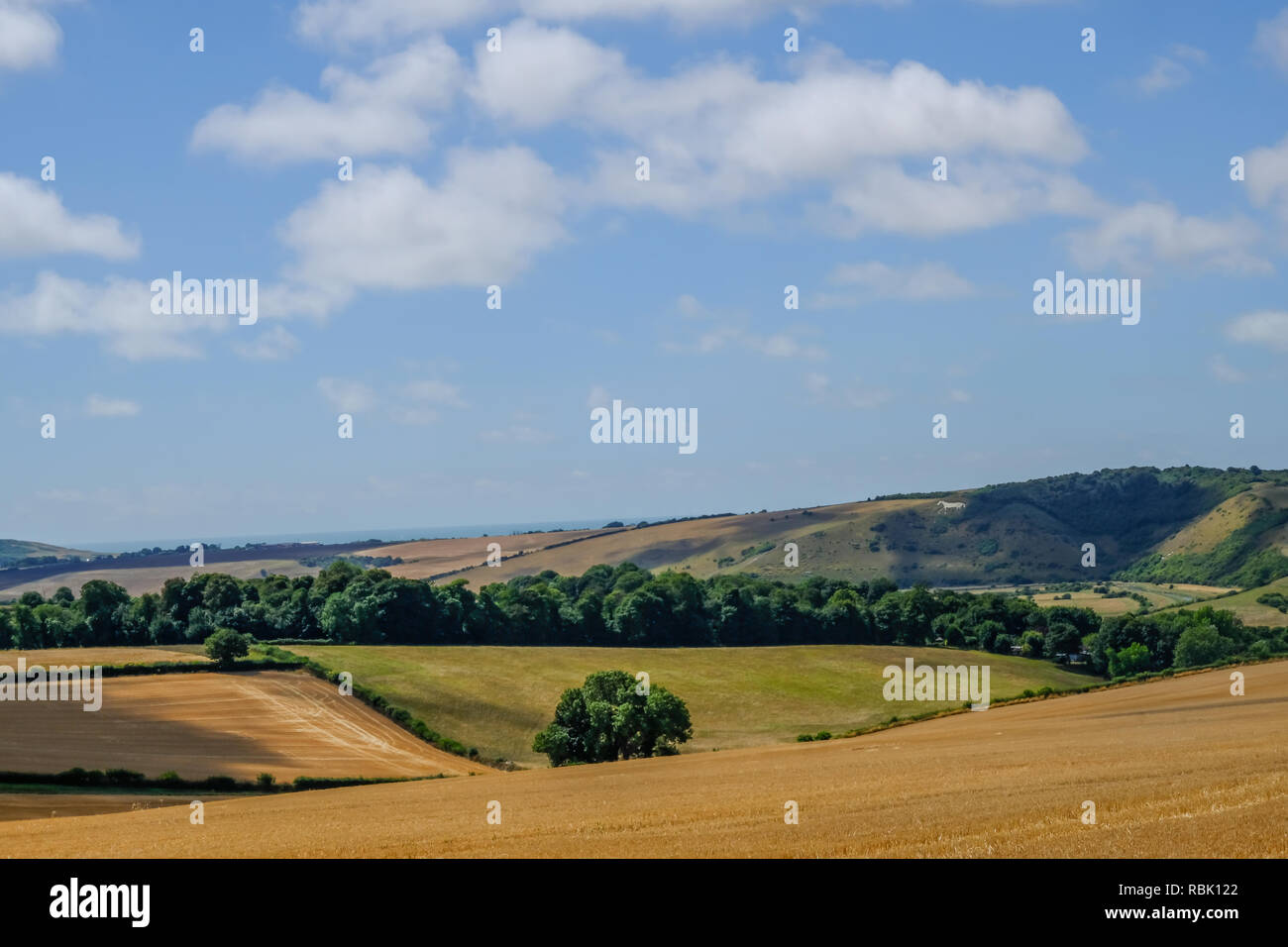 South Downs National Park in Sussex, a view of the beautiful countryside.  Taken in summer on a bright blue sky aftrnoon. - Stock Image