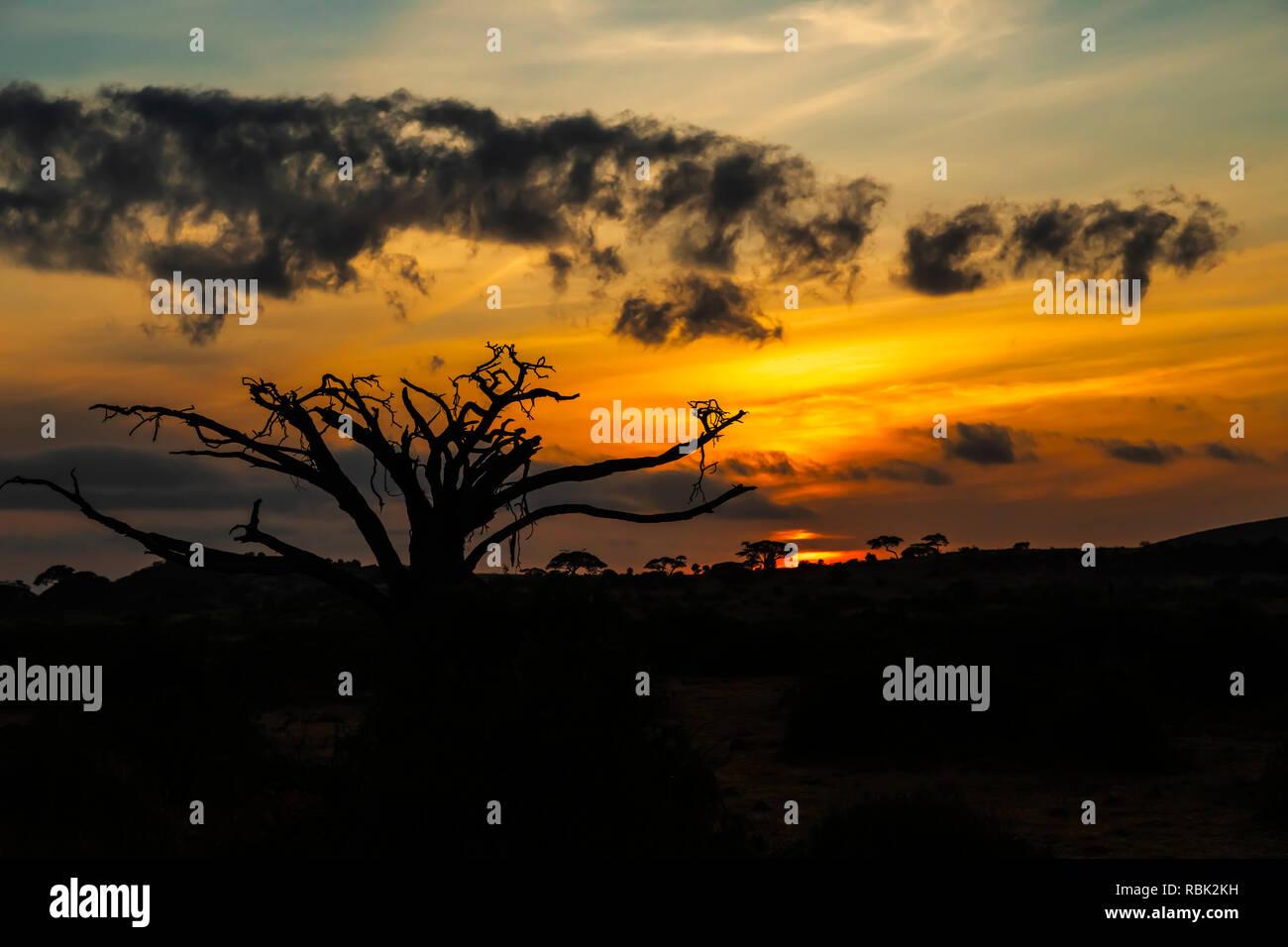 Sunrise over Amboseli National Park, Kenya - Stock Image