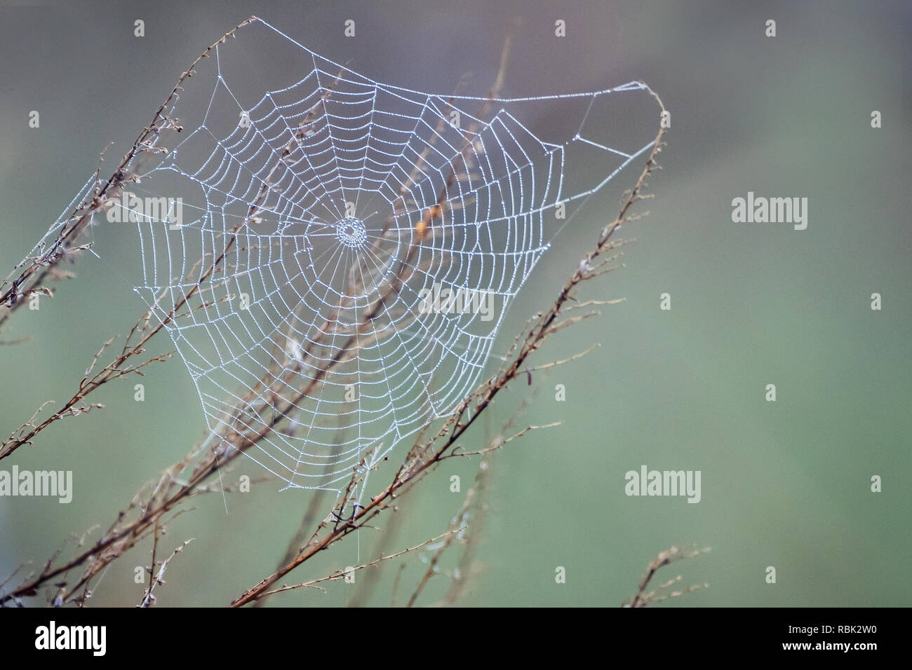 Orb spider web on a  late April morning - Stock Image
