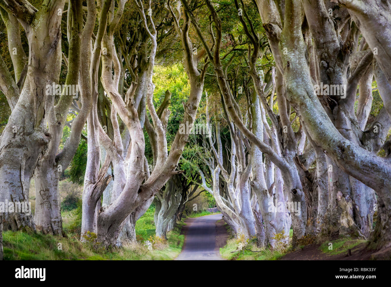 The Dark Hedges in Northern Ireland where scenes from Game of Thrones was filmed. - Stock Image
