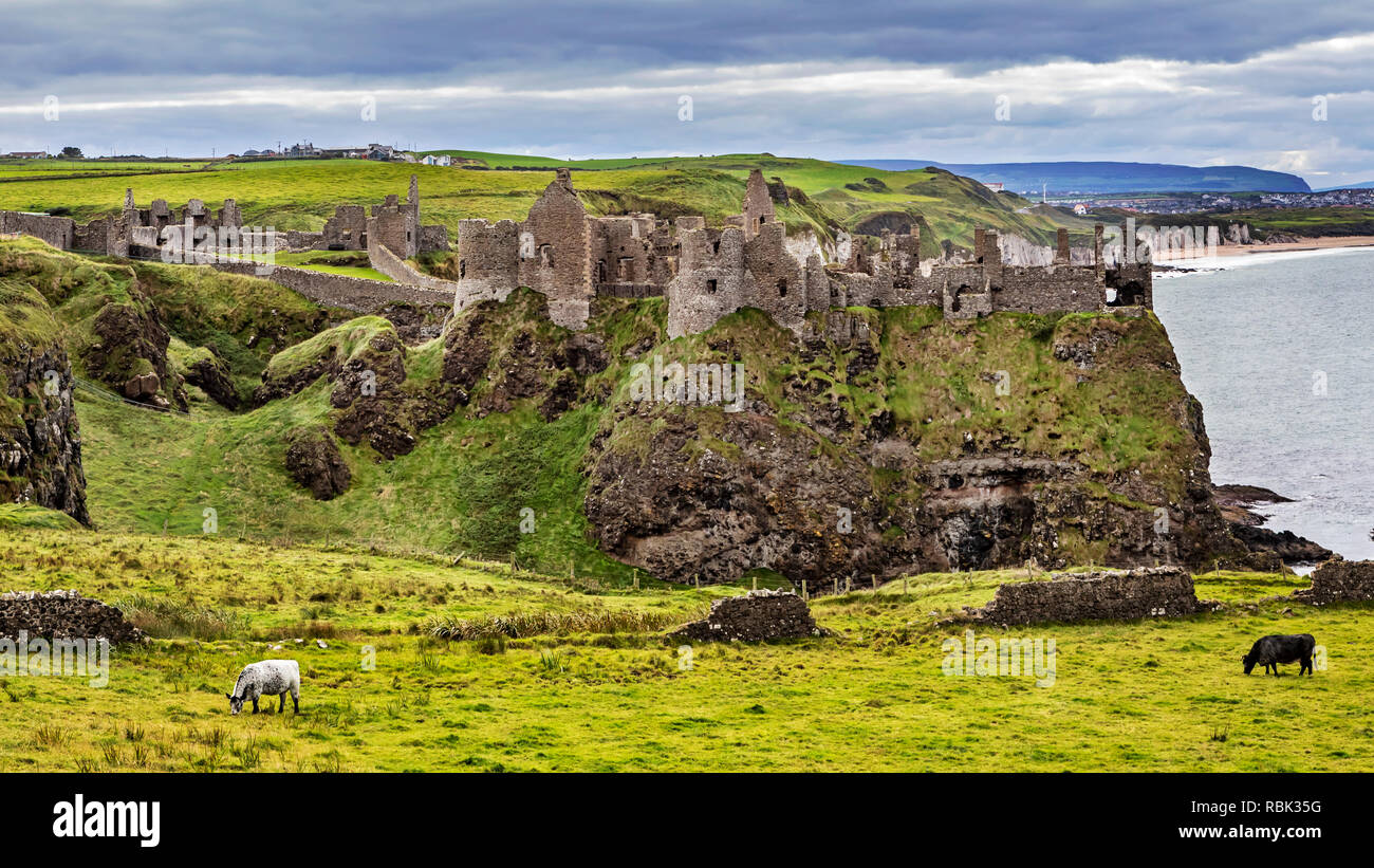 The Dunluce Castle in County Antrim Northern Ireland. The Medieval Castle is presented as the Greyjoy Castle in the the Game of Thrones. - Stock Image