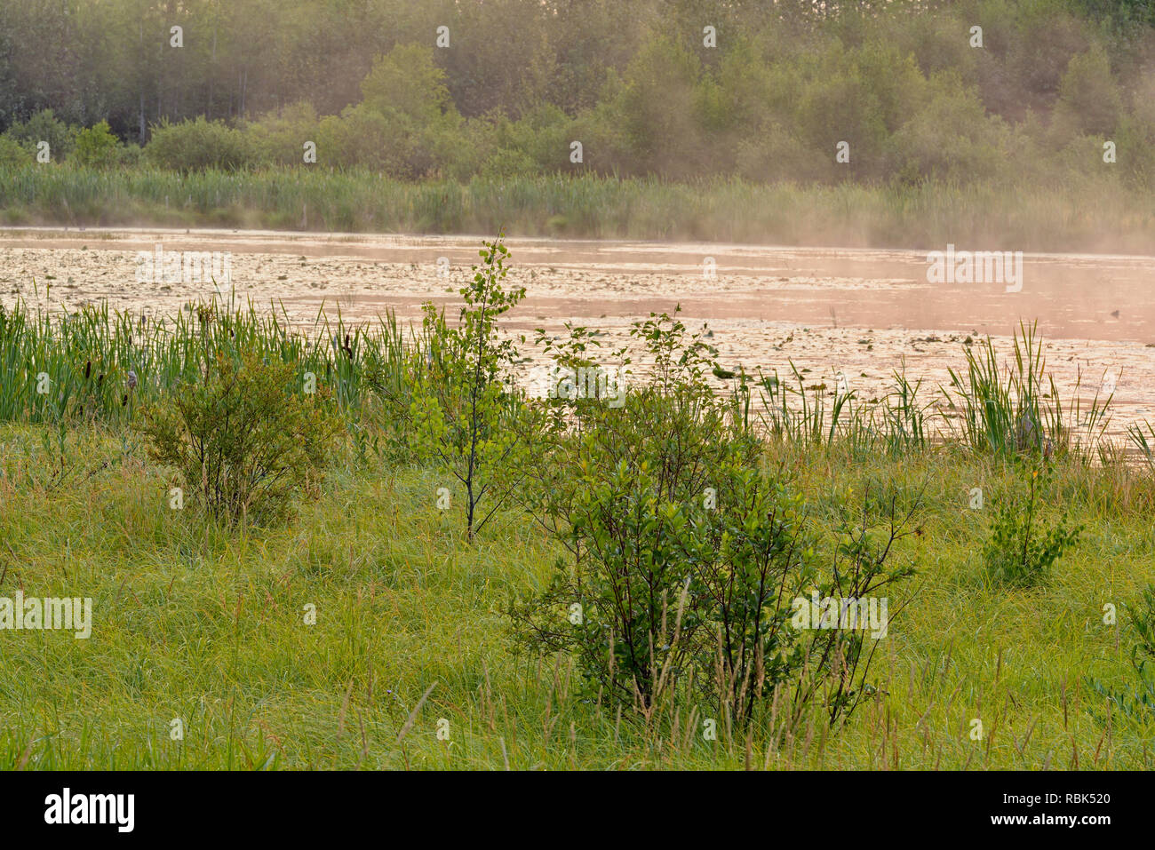 Wetland channels and flowers, Elk Island National Park, Alberta, Canada - Stock Image