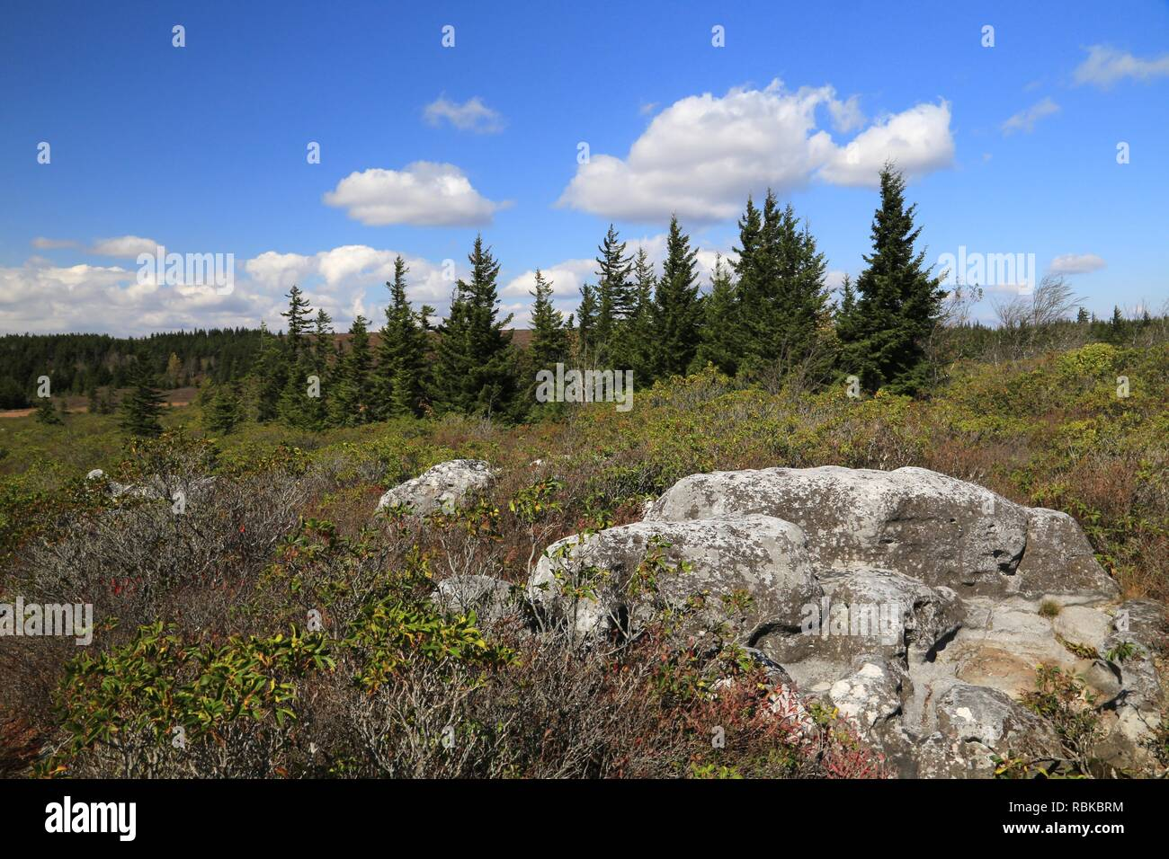 Mountain top at Dolly Sods Wilderness - Stock Image