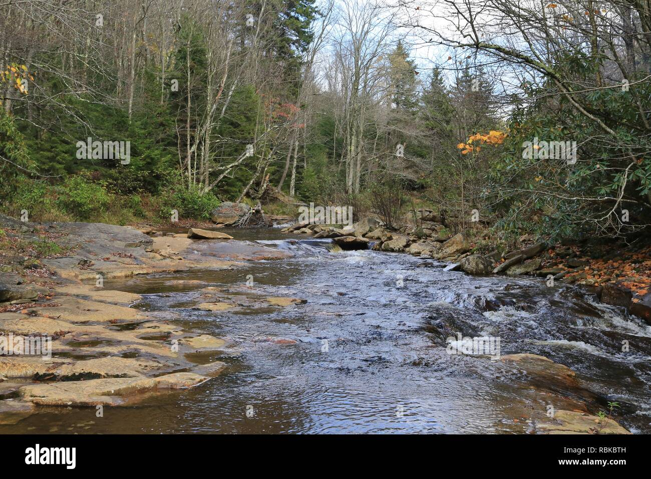 Red creek at Dolly Sods wilderness - Stock Image