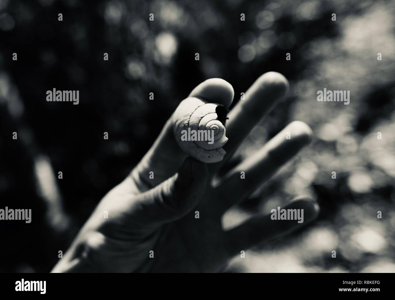 A hand holding a native snail shell in black and white, Hiking through Cape Hillsborough National Park, Queensland, Australia - Stock Image