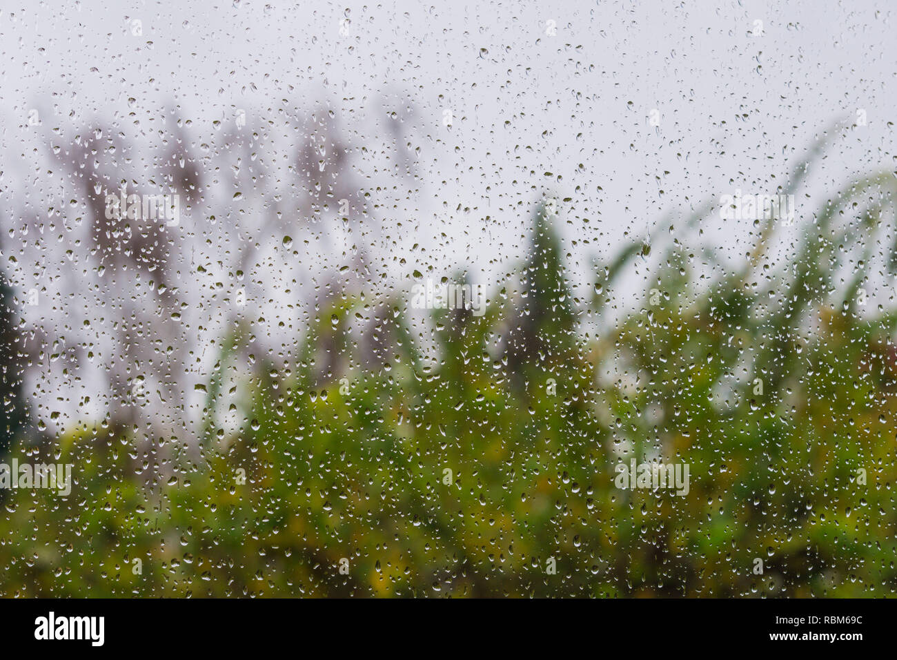 Drops of rain on the window, blurred trees on the background - Stock Image