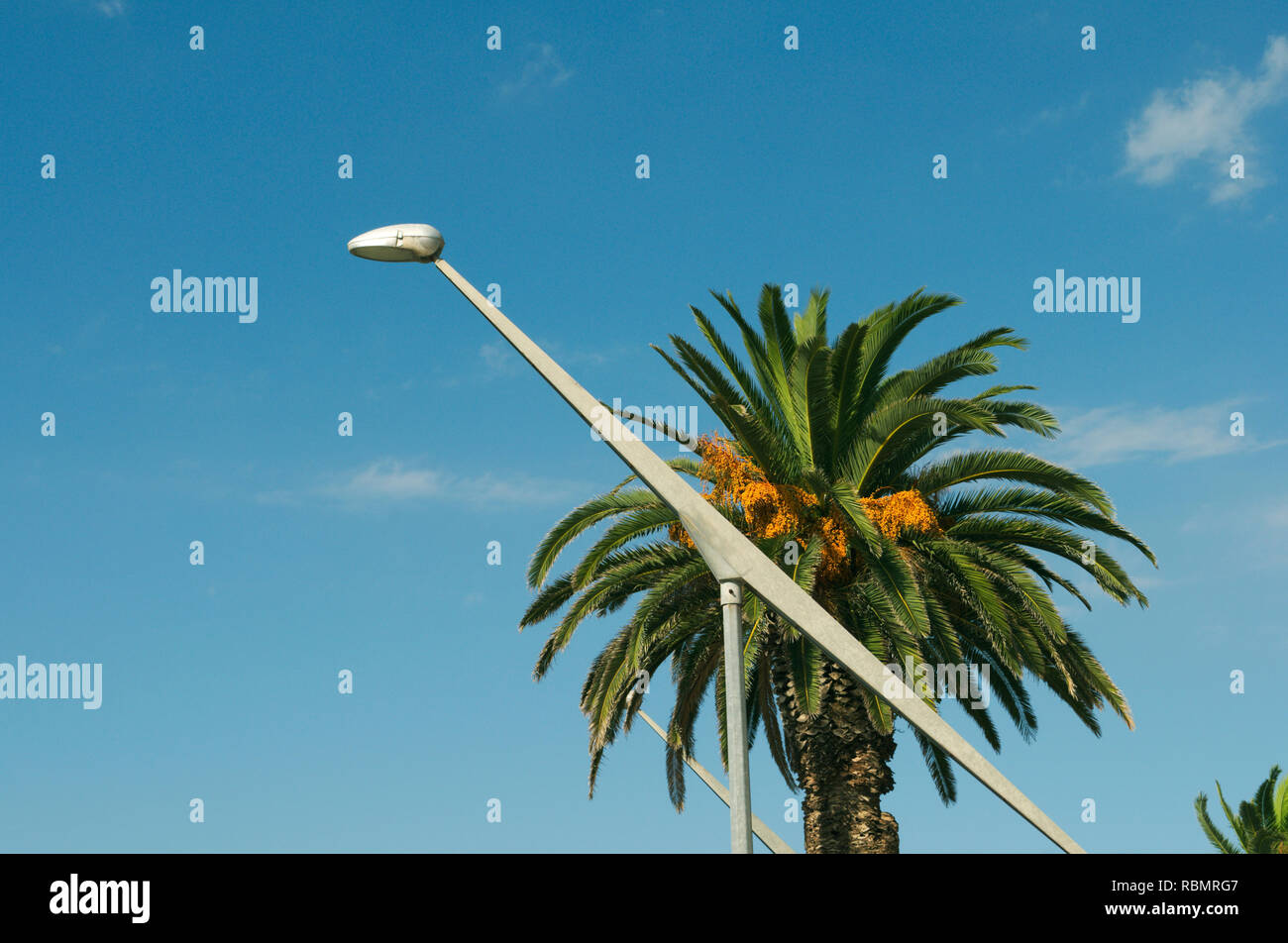 palm tree and modern design street lamp Stock Photo