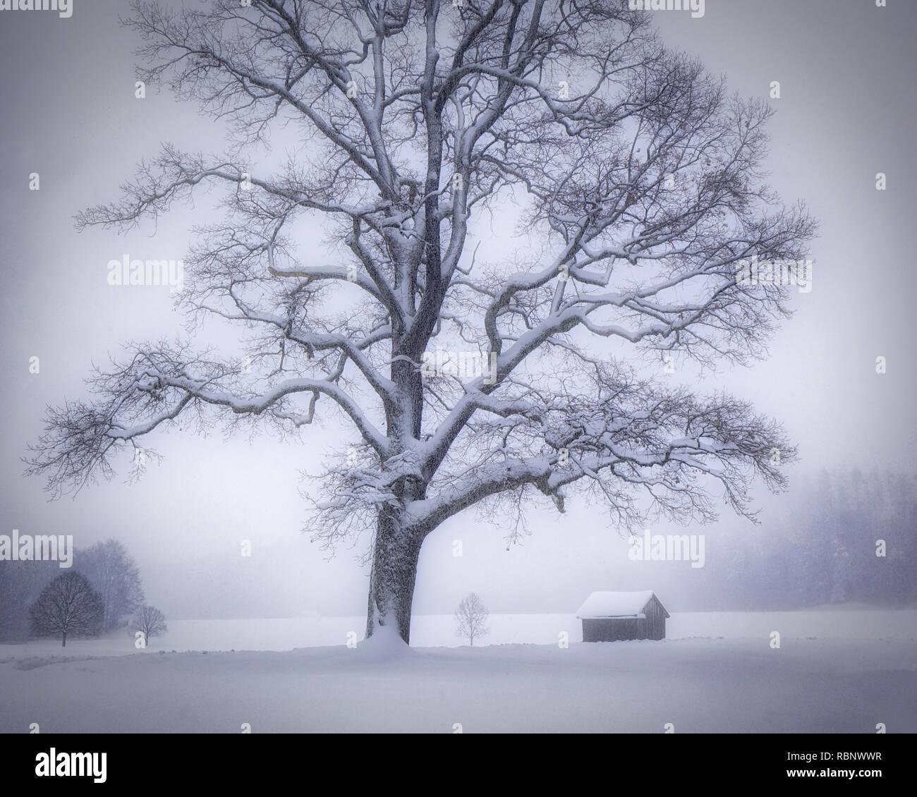 DE - BAVARIA: Wintertime near Bad Tölz  (HDR-Image) Stock Photo