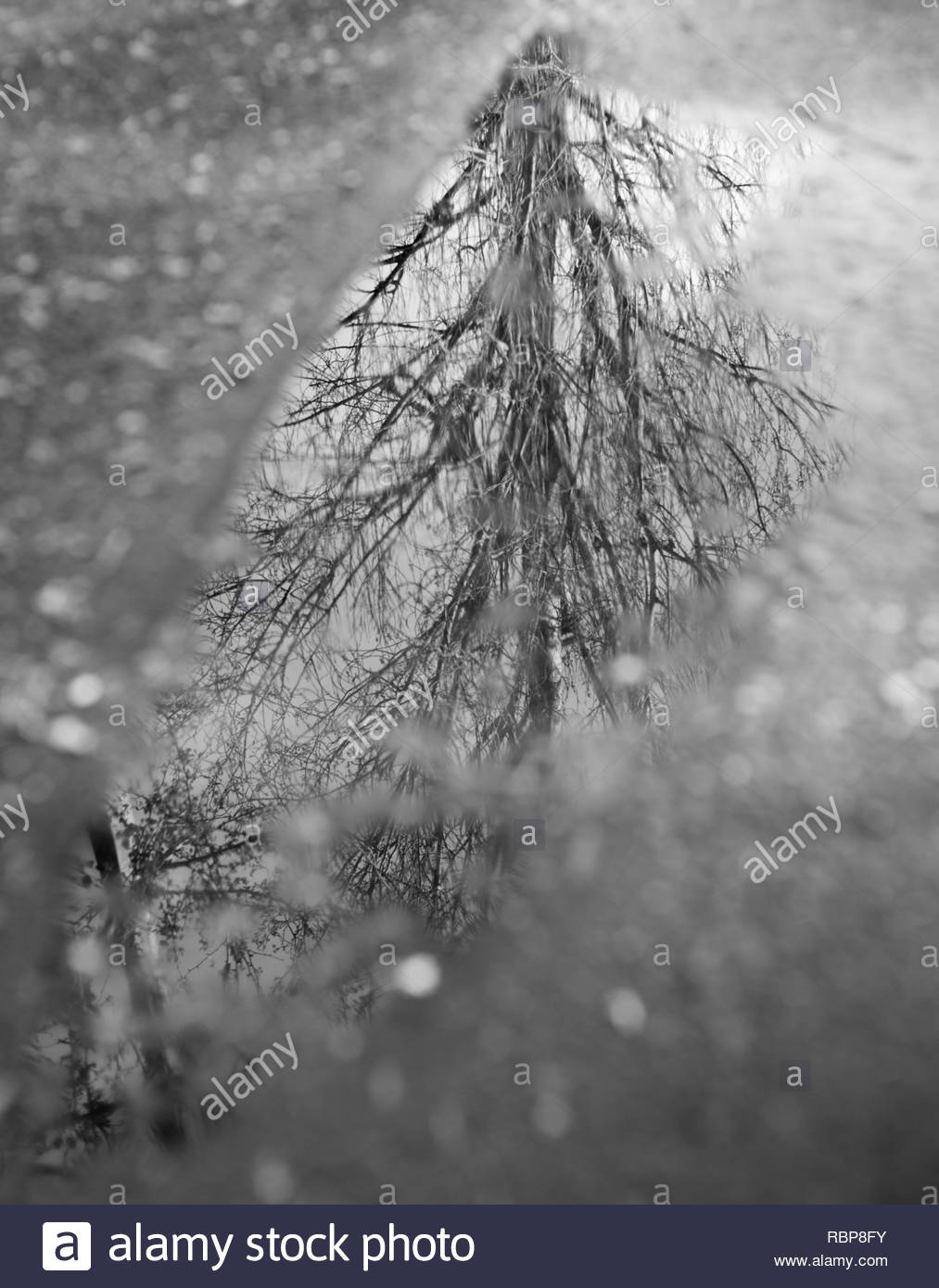 Tree reflection in puddle - Stock Image