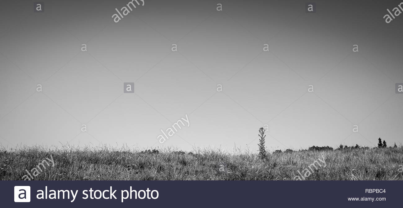 Grass and weeds in a field - Stock Image
