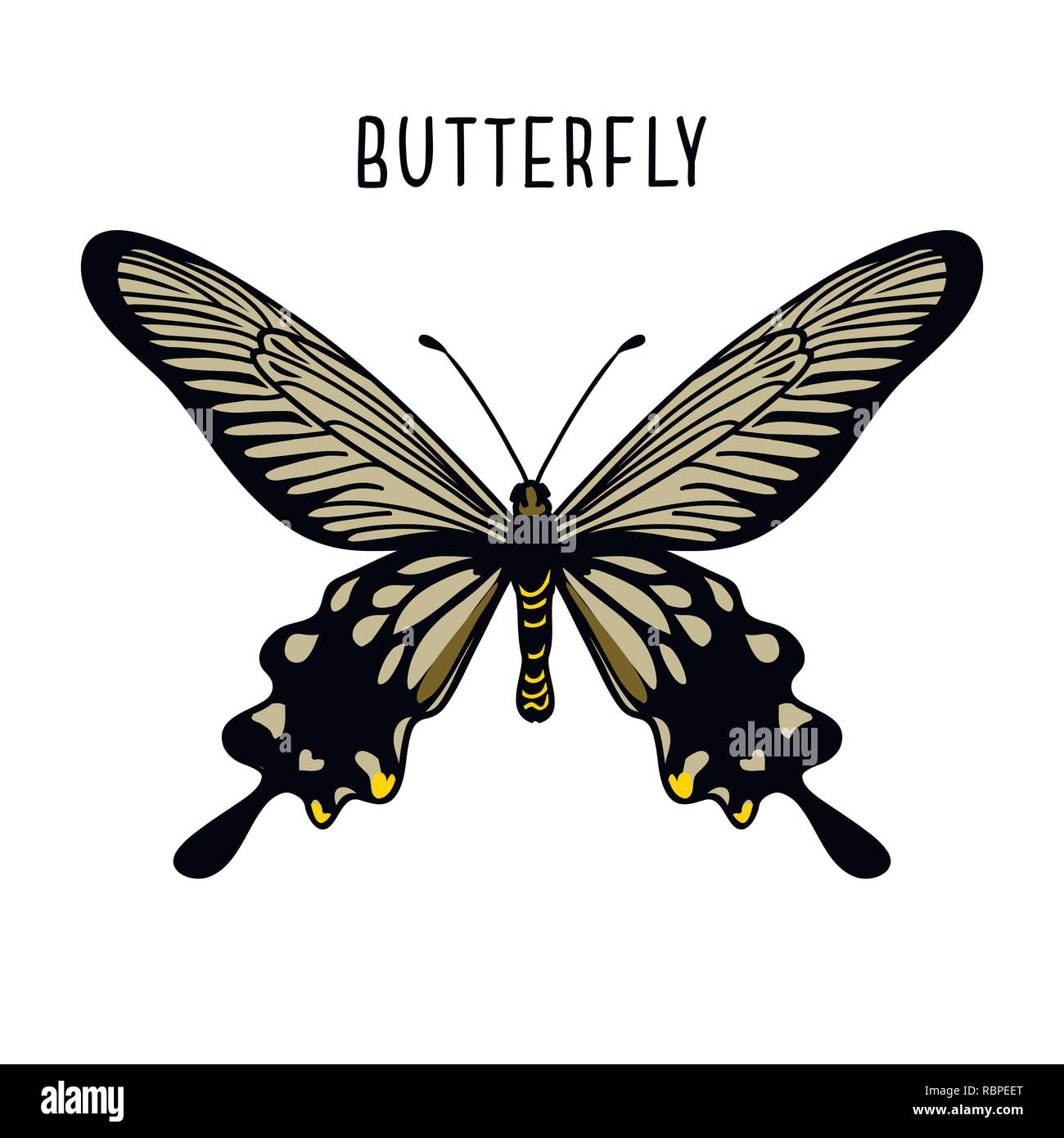 Monochrome black butterfly. Graphic icon of butterfly. Black silhouette of butterfly. Butterfly isolated on white background - Stock Vector