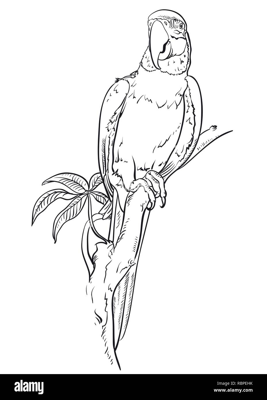 parrot macaw sits on the branch coloring pages bird RBPEHK