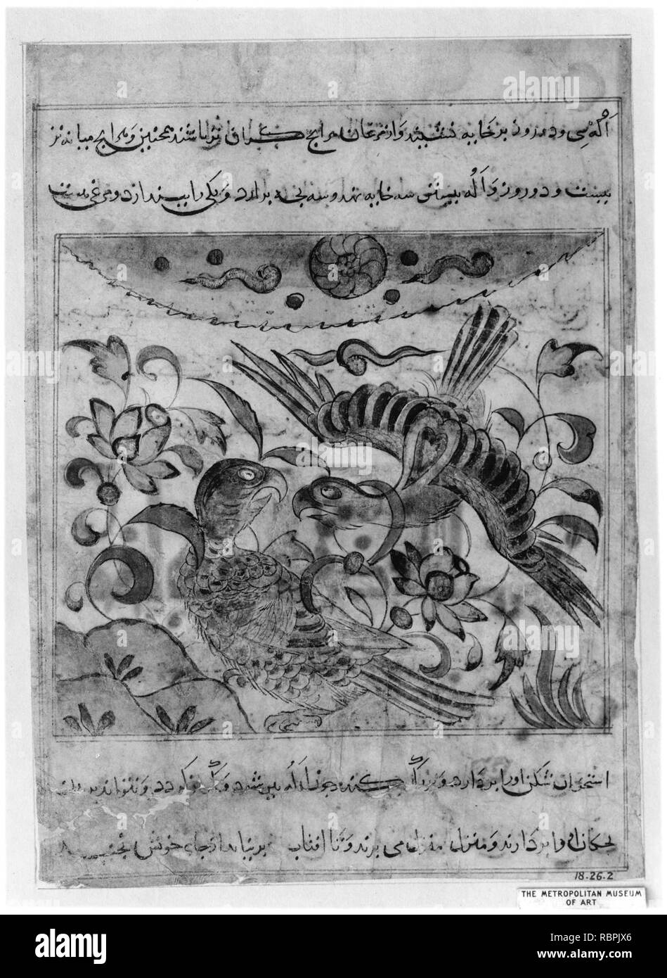 'Pair of Eagles', Folio from a Manafi' al-Hayawan (On the Usefulness of Animals) of Ibn Bakhtishu' - Stock Image
