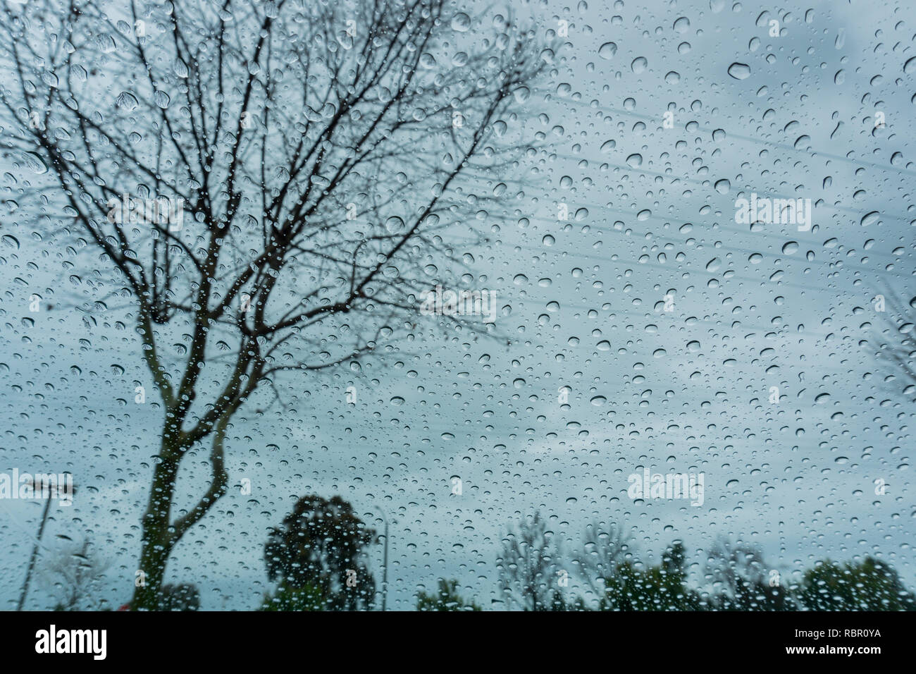 Drops of rain on the window; blurred trees in the background; shallow depth of field - Stock Image