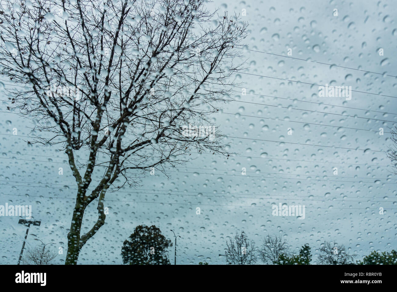 Blurred drops of rain on the window; focus on the tree in the background - Stock Image