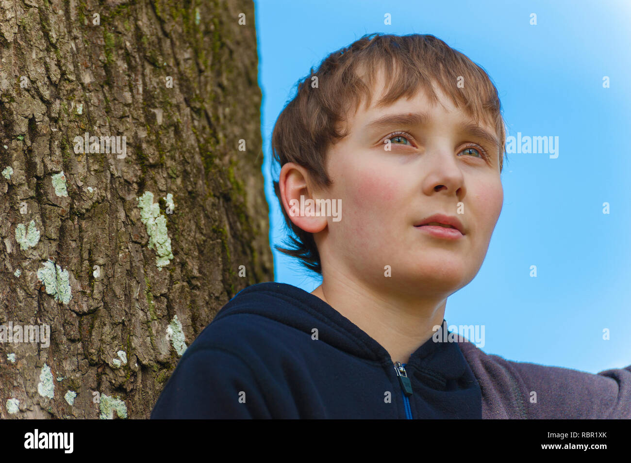 Close up of a young boy in a tree wearing a blue sweatshirt. - Stock Image