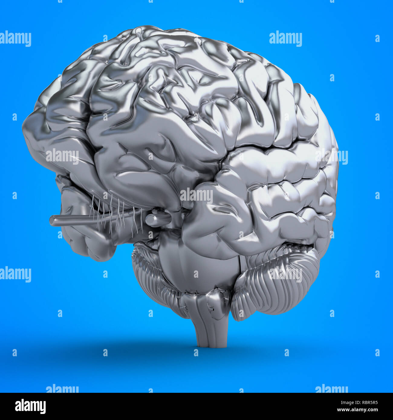 Illustration of a brain. - Stock Image