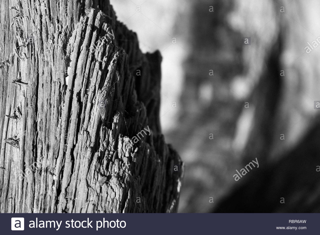 Close-up of driftwood texture - Stock Image