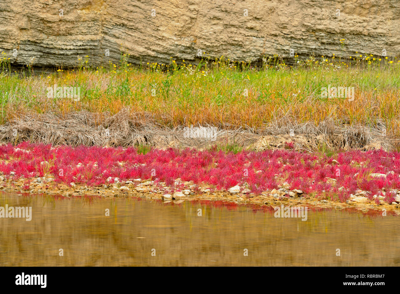 Salt River with salt-tolerant red samphire, Wood Buffalo National Park, Albert, Canada Stock Photo