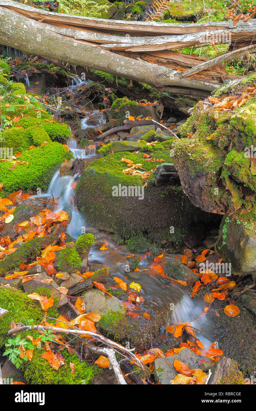 Waterfall on the forest stream in autumn colors. Bieszczady. Bieszczady National Park. - Stock Image