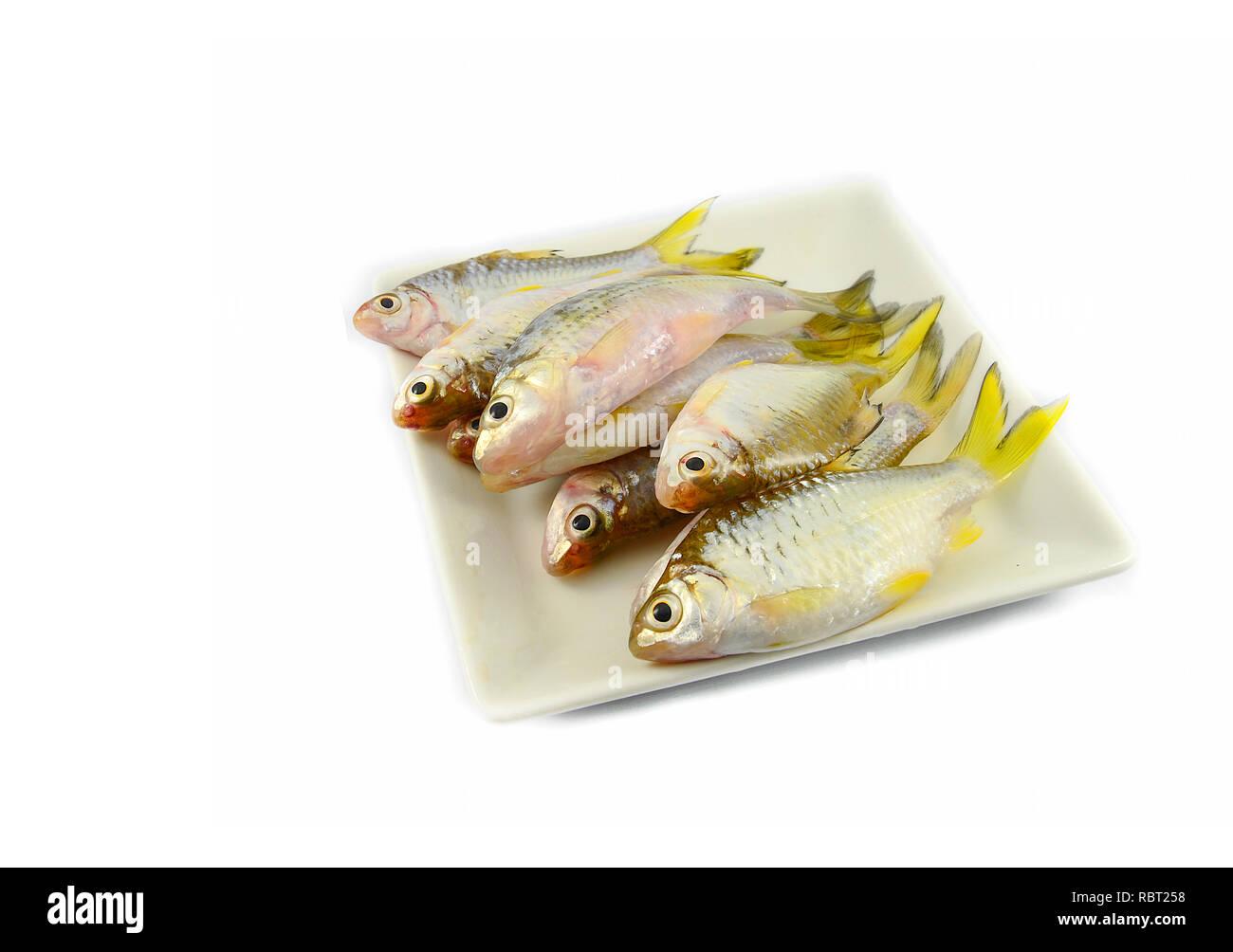 small fish isolated / siamese mud carp fish isolated on white - yellow tail fish Stock Photo