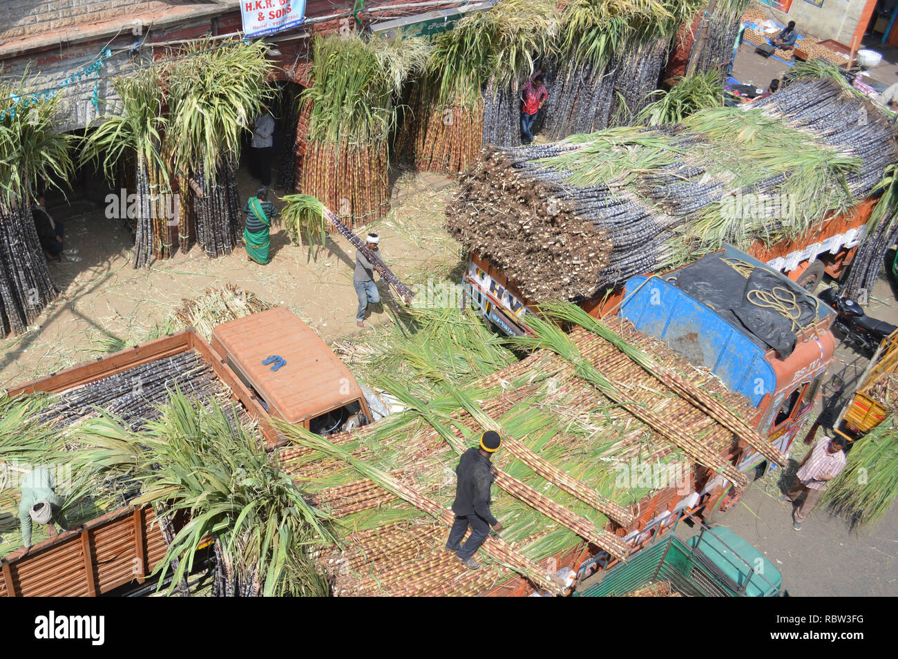 Bangalore, India. 12th Jan, 2019. Bundles of sugarcane are being stocked outside a wholesale market on the eve of Makar Sankranti Festival, in Bangalore, India, Jan. 12, 2019. People exchange pieces of sugarcane to signify sweetness during Makar Sankranti, a Hindu festival which marks the return of the sun to the northern hemisphere. Credit: Stringer/Xinhua/Alamy Live News Stock Photo