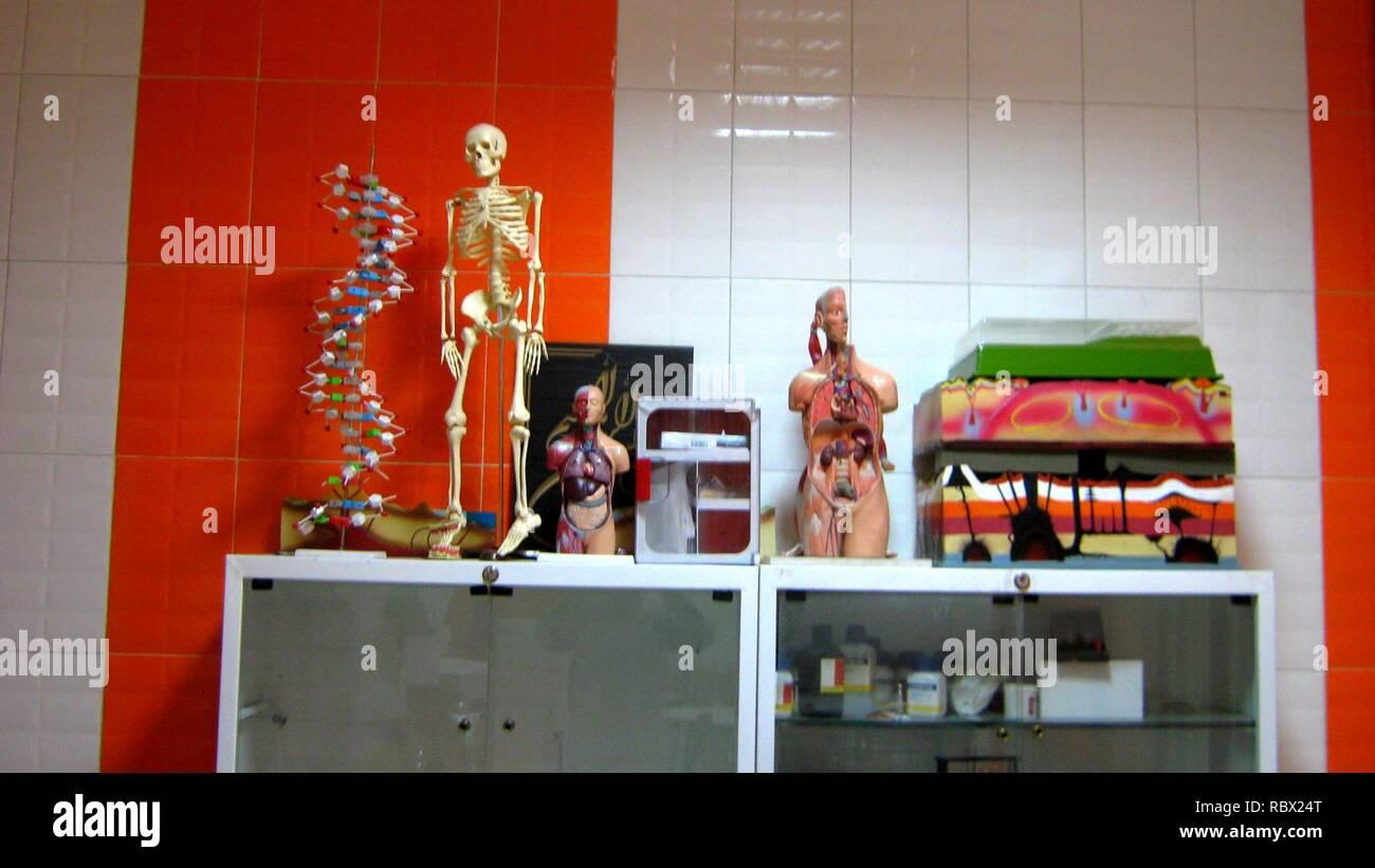Abu Reyahan al-Biruni Middle School - plastic human body models - Nishapur 001. - Stock Image