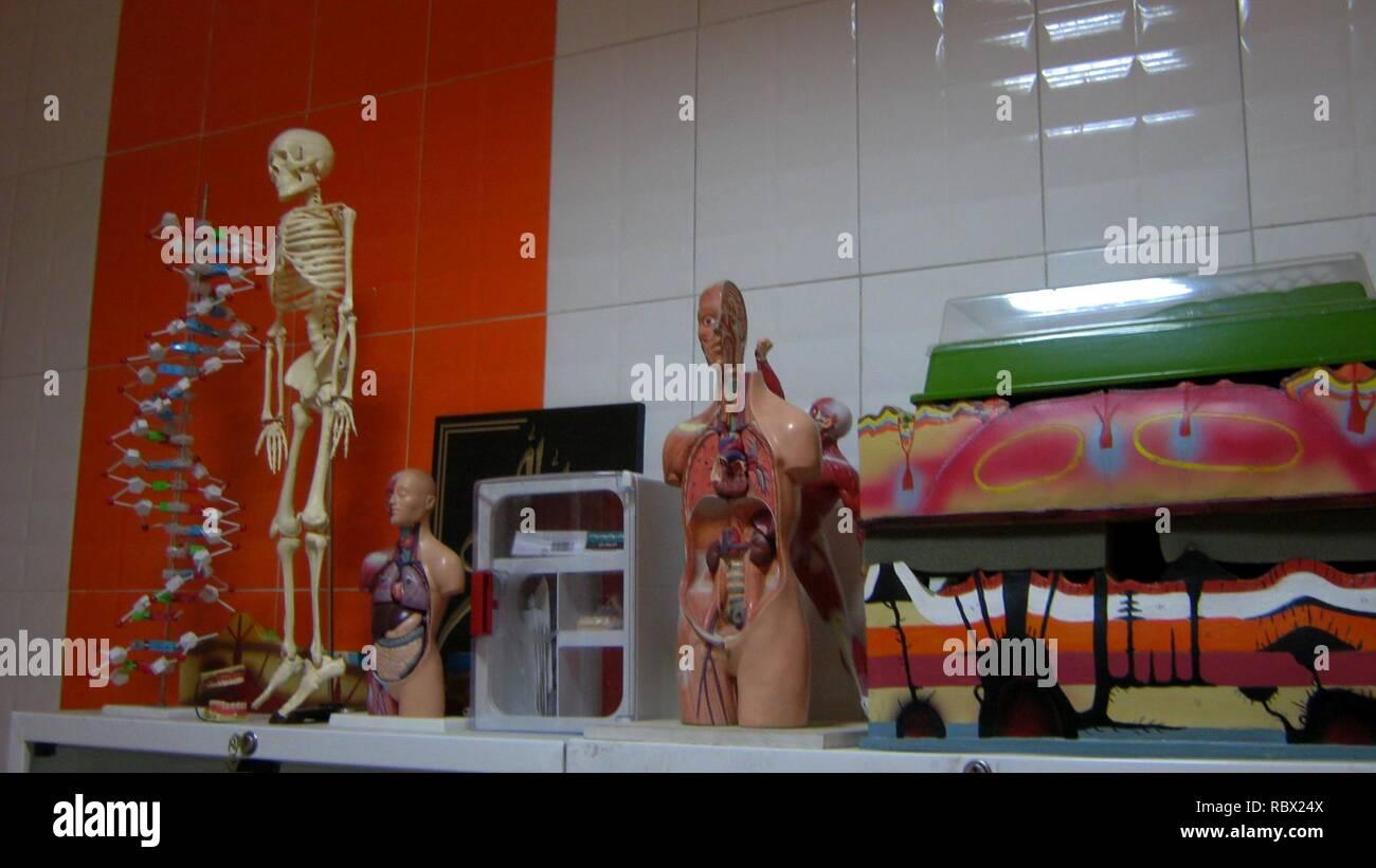 Abu Reyahan al-Biruni Middle School - plastic human body models - Nishapur 002. - Stock Image