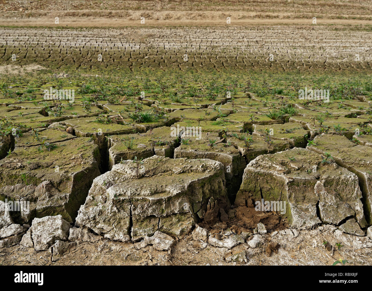 Shore of a dry lake, the earth has broken up into large floes, small plants have grown, the dryness is clearly visible, consequence of the hot summer  - Stock Image