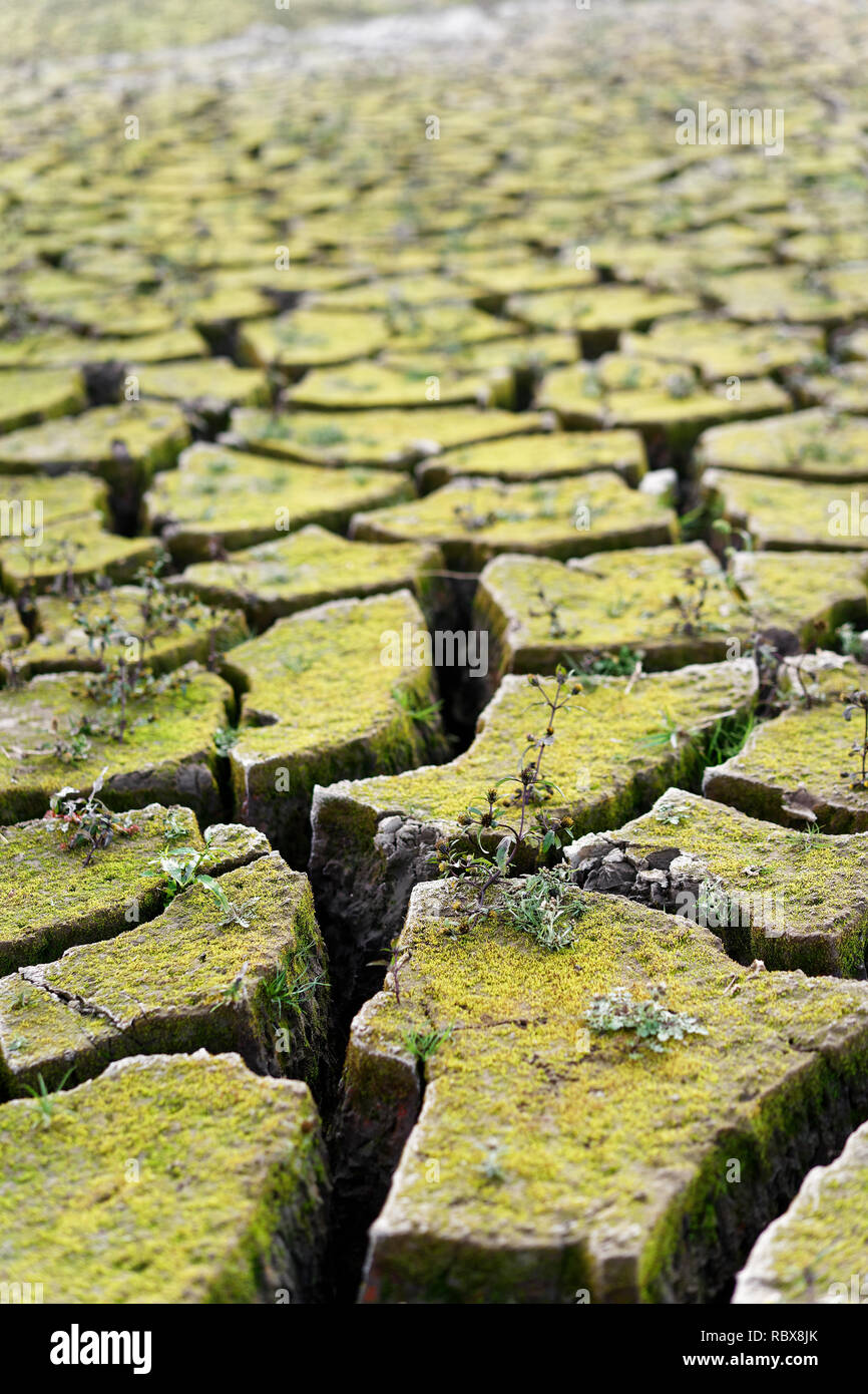 Close-up of the bottom of a dry lake, the earth has broken up into large floes, small plants have grown, the dryness is clearly visible, consequence o - Stock Image