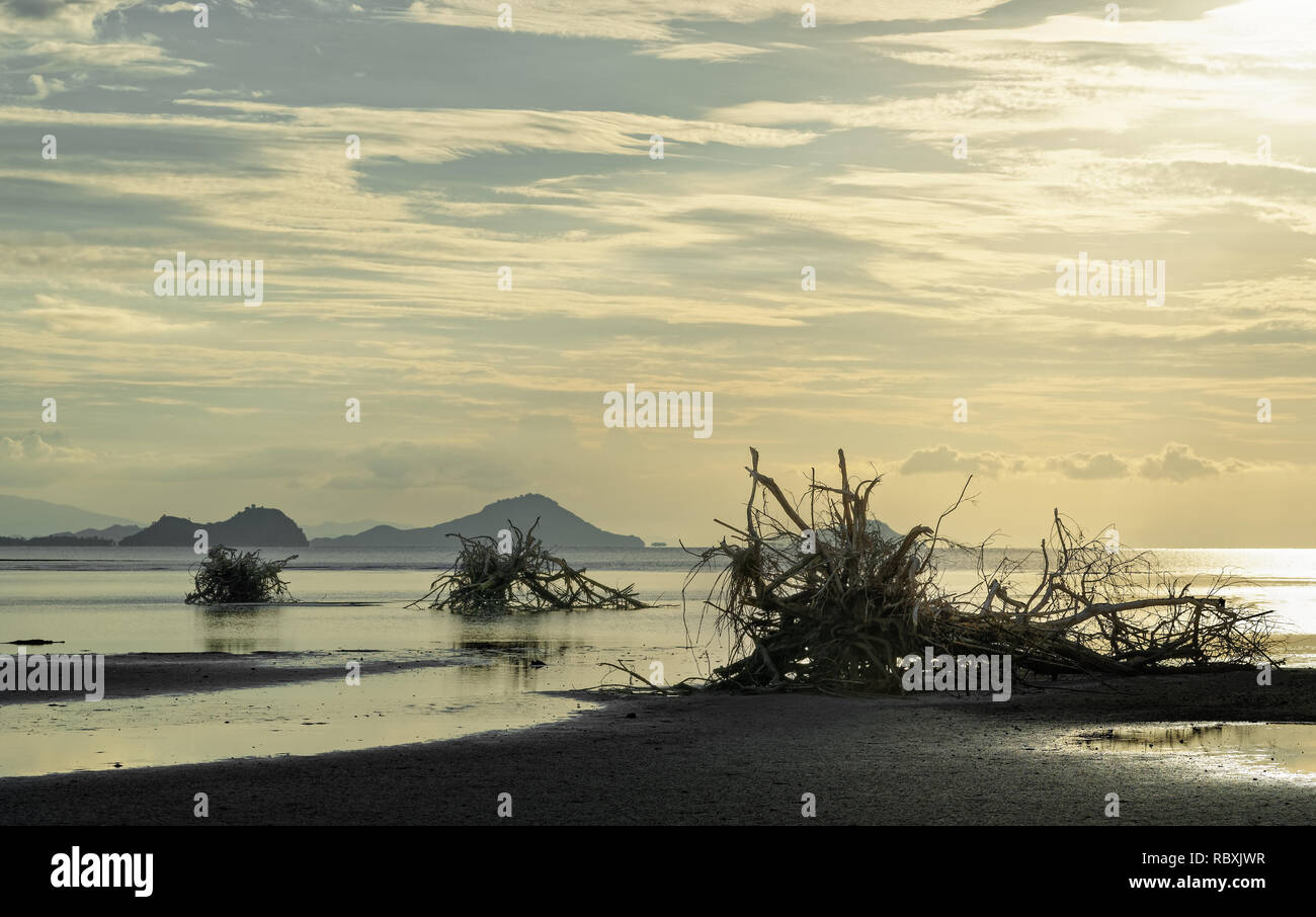 Large tree roots are picturesquely situated on the beach at low tide, in the background a mountain range, evening light, reflections - Location: Indon - Stock Image