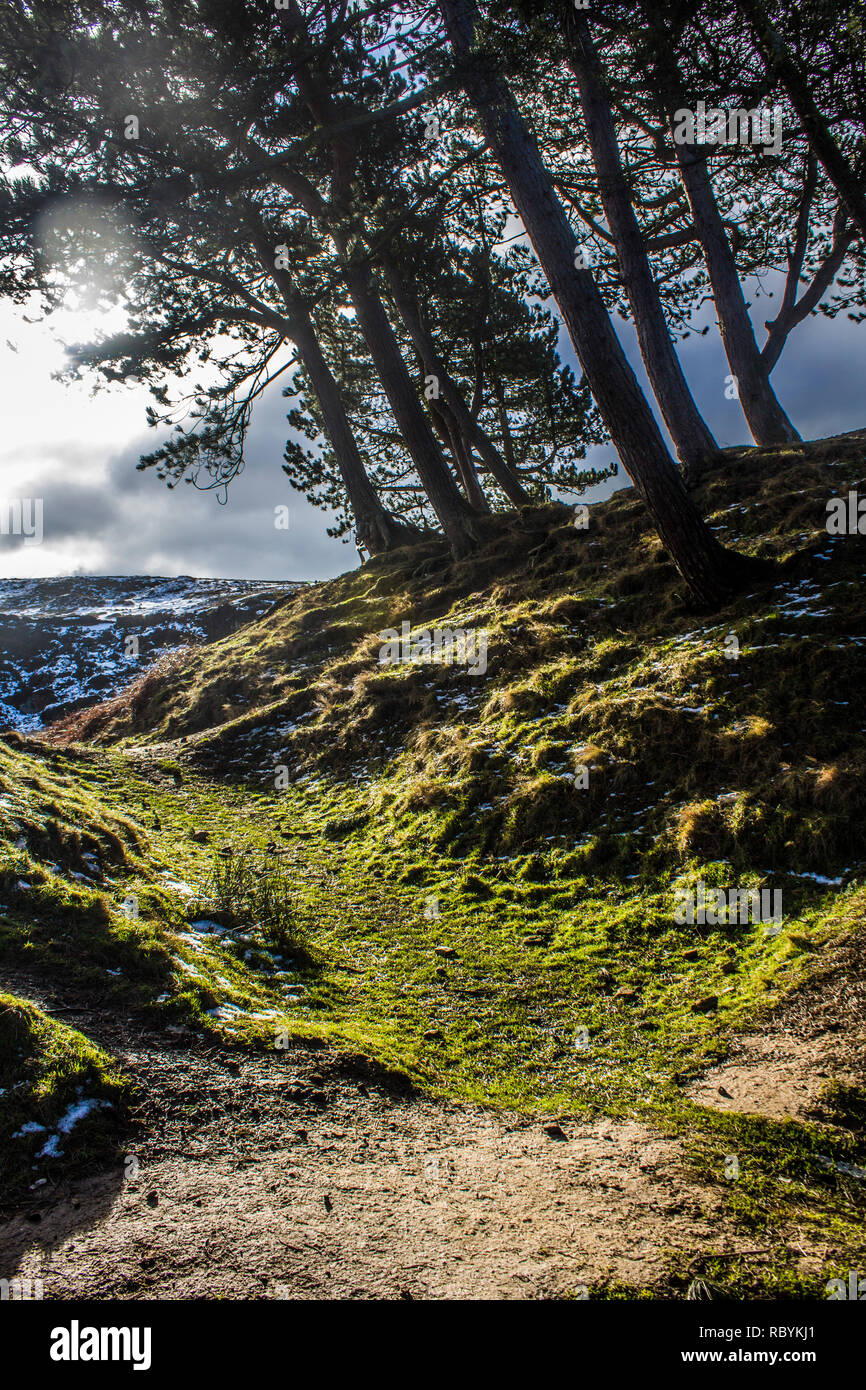 Trees and a path on Ilkley Moor, West Yorkshire, in the winter - Stock Image