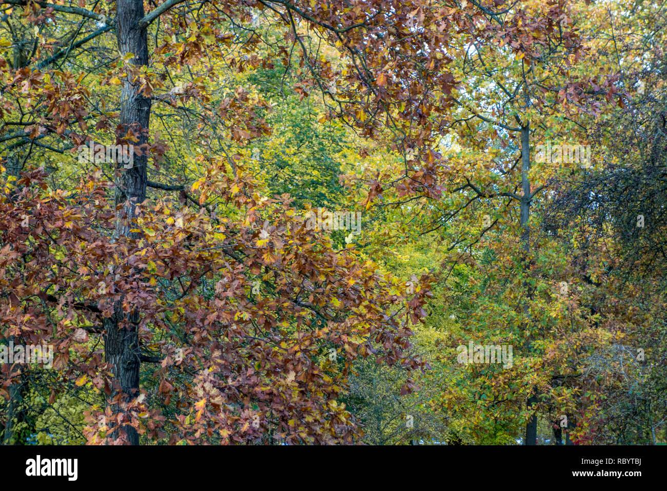 Autumn trees, Autumn foliage, autumn leaves - Stock Image