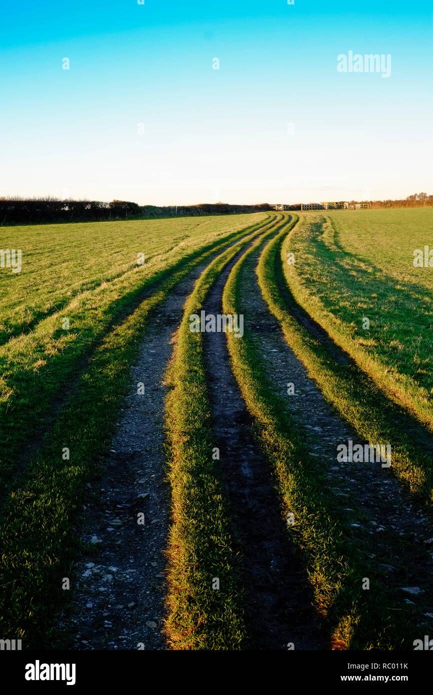 Deep tracks across farmland in the late afternoon. East Soar, Salcombe, South Hams. Devon. UK - Stock Image