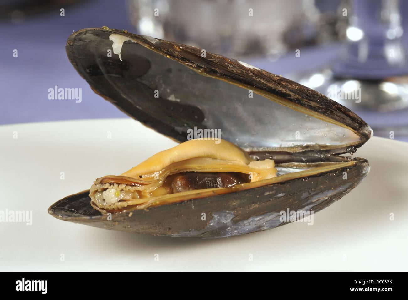 Frische Miesmuschel | Fresh mussel in a shell - Stock Image