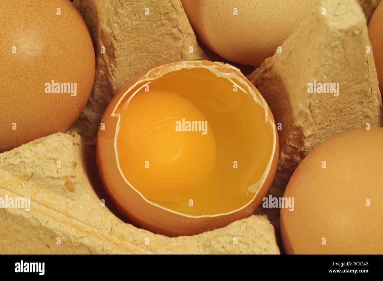 Eier in Schachtel | Eggs in package - Stock Image