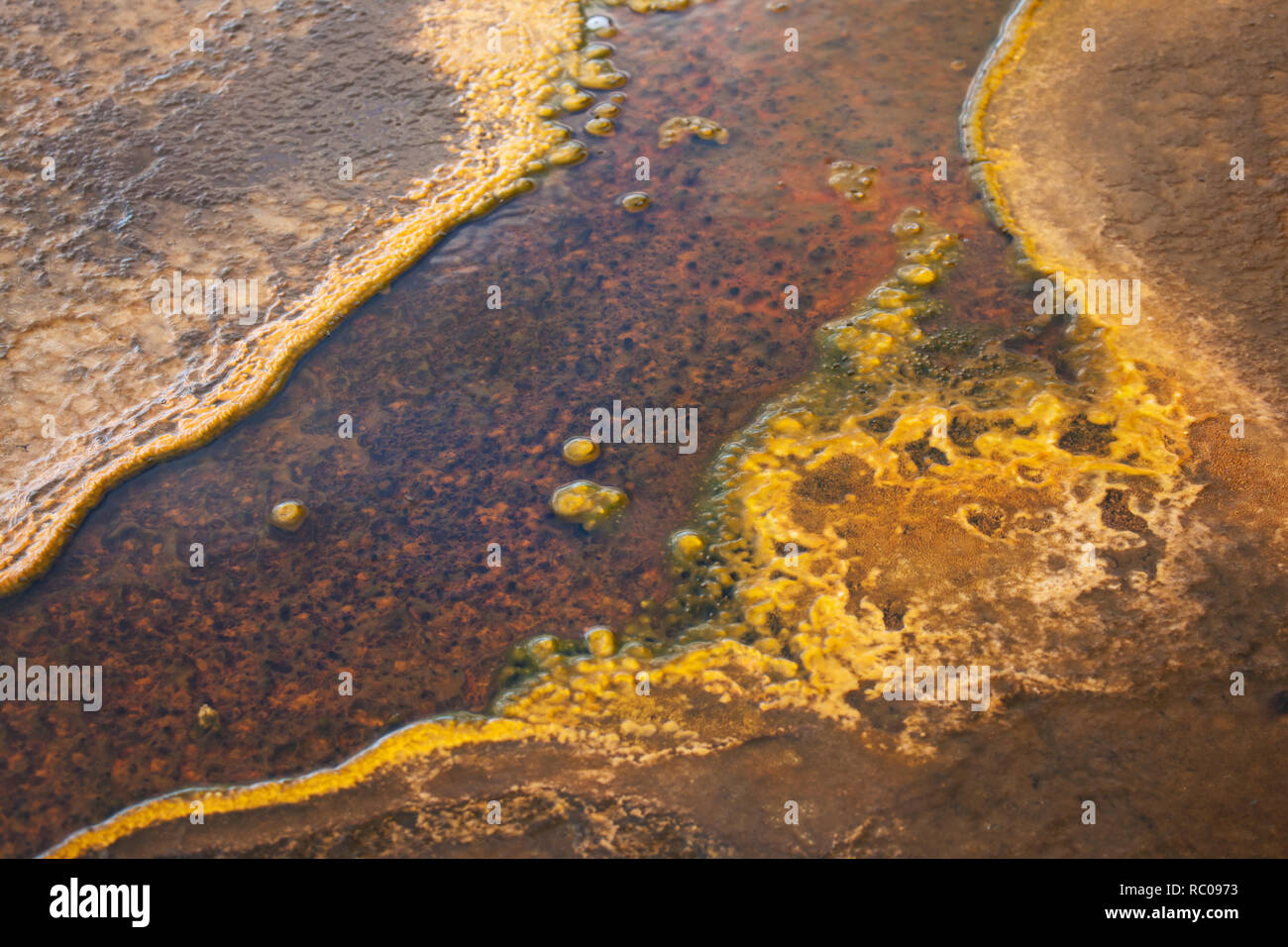 Thermal bacteria mat in Yellowstone National Park, Wyoming, USA - Stock Image