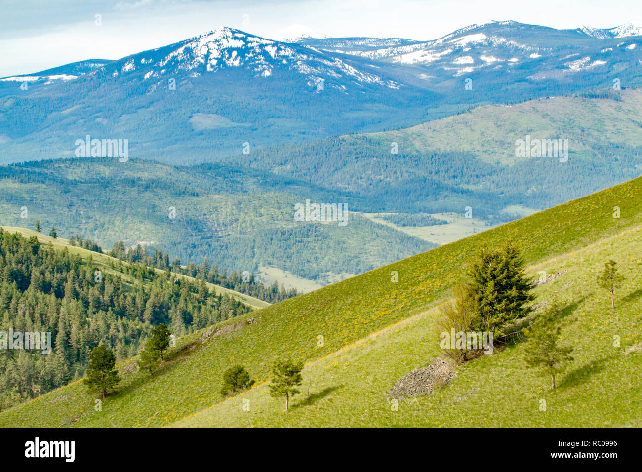 Palouse Prairie grasslands on steep hills in National Bison Range, Montana Stock Photo