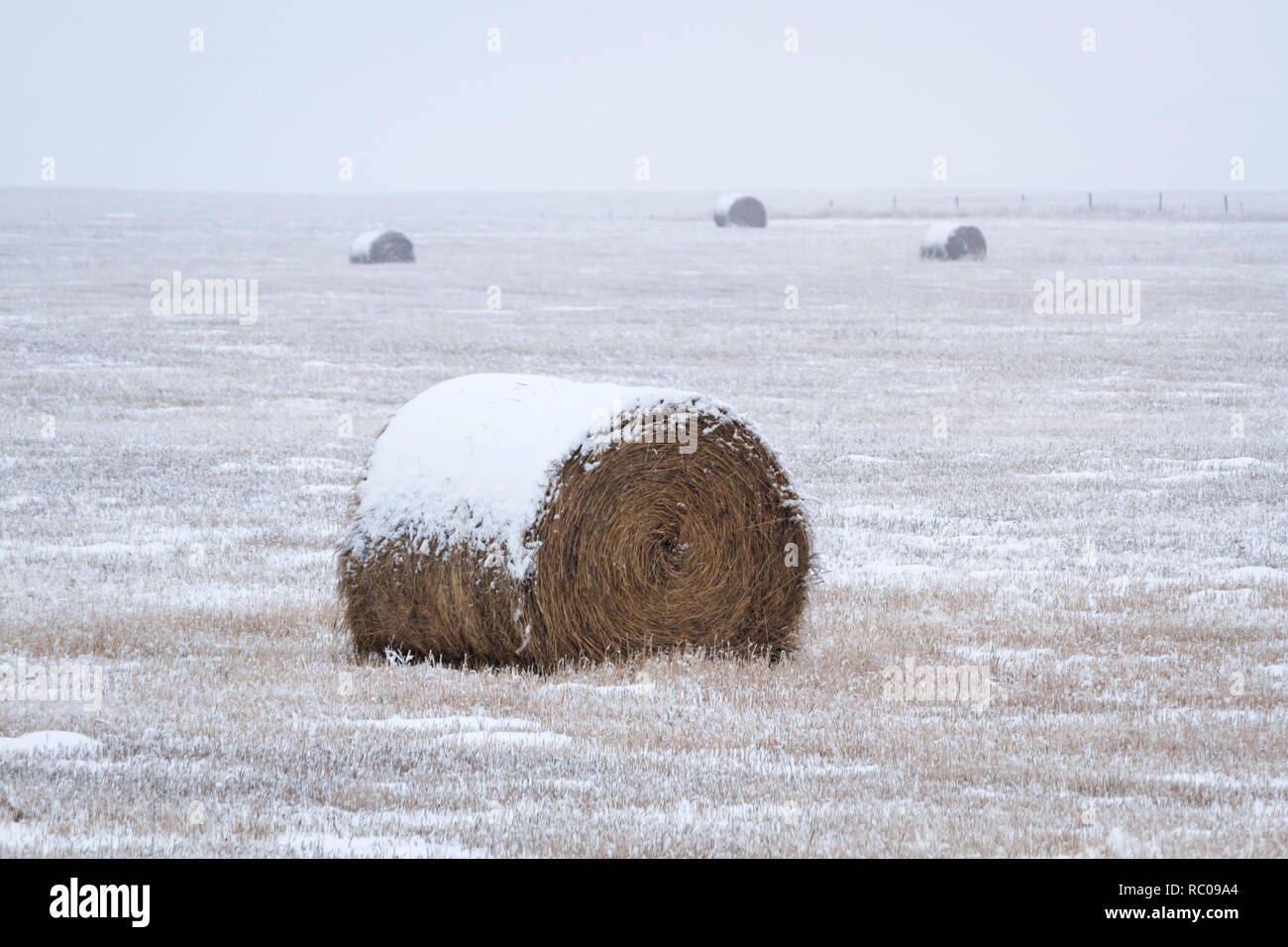 Bales of hay and field are partially covered with snow on cloudy winter day in rural Alberta, Canada. Stock Photo