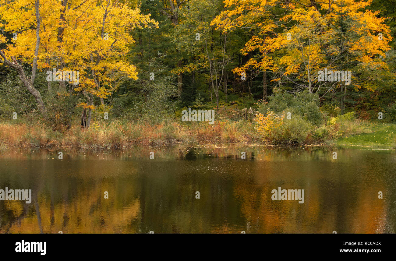 Autumn leaves in the forest reflected in he river in Muskoka Stock Photo