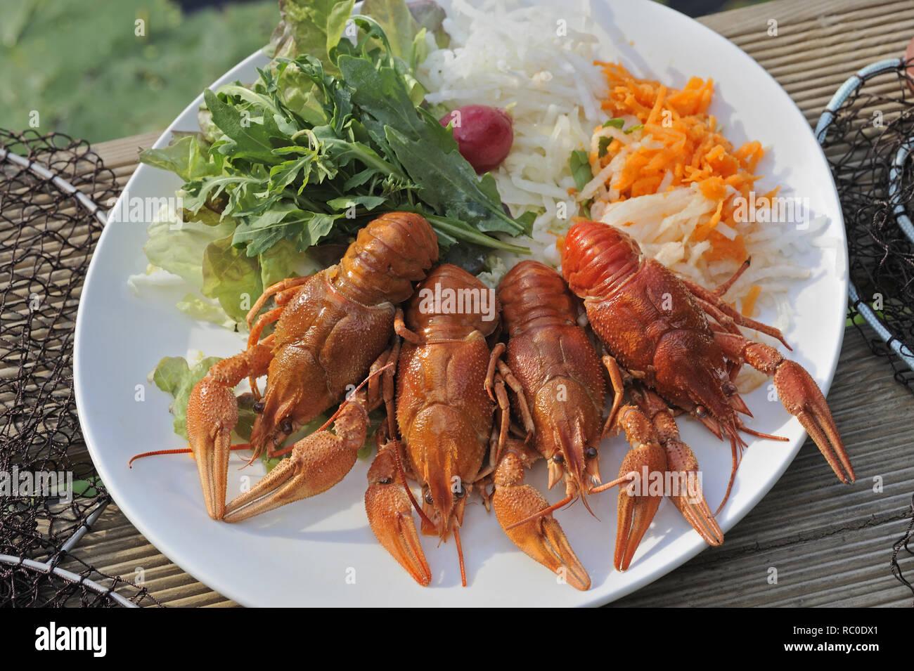 Flusskrebse mit gemischtem Salat | European crayfish, Astacus astacus,  with mixed salad, crawfish, mudbug, crawdad, crawdaddy - Stock Image