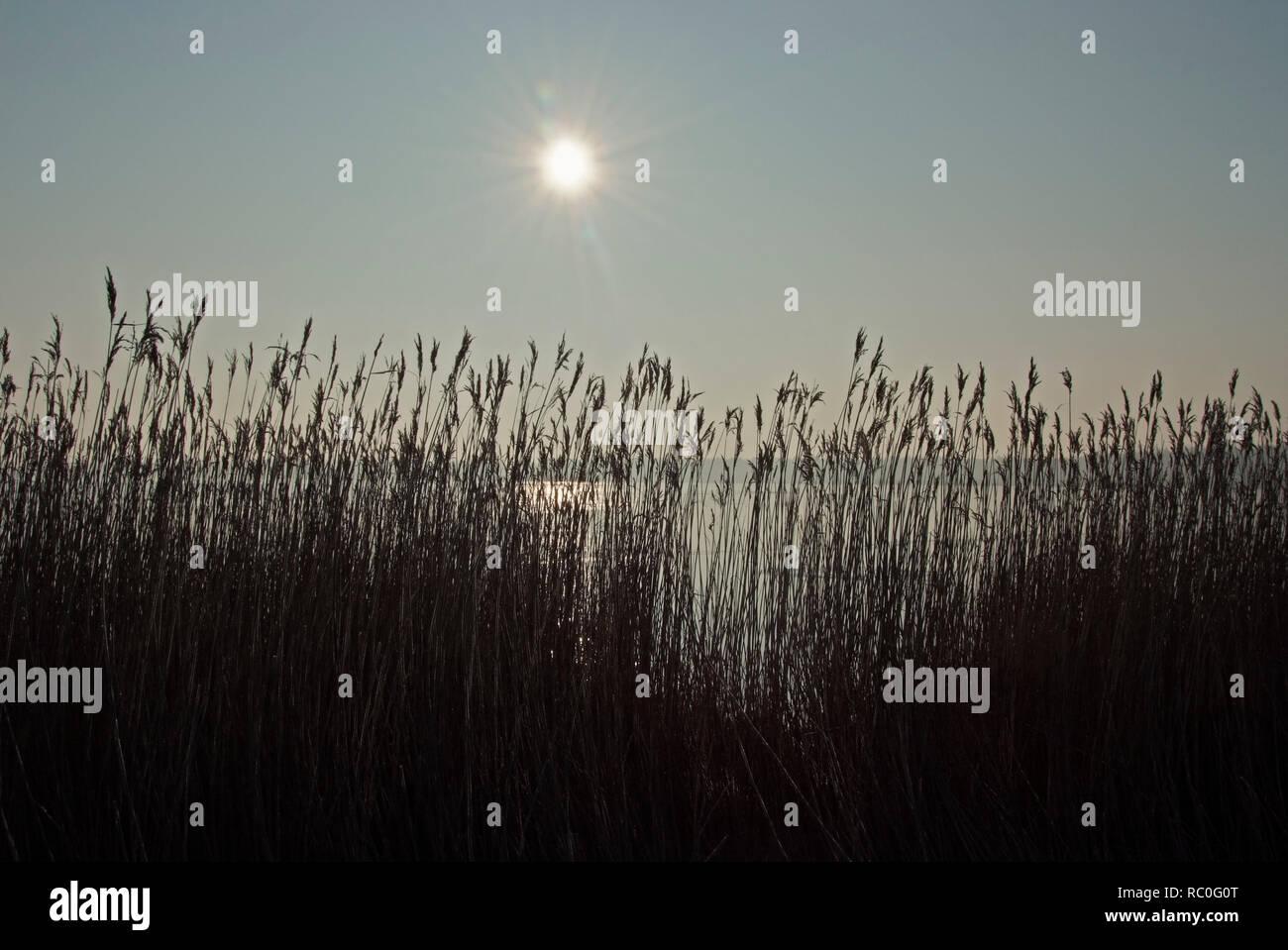 Winterstimmung am Bodden, Born, Darss, Fischland-Darss-Zingst, Mecklenburg-Vorpommern, Deutschland, Europa | winter at the salt marsh side, Darss, Fis - Stock Image