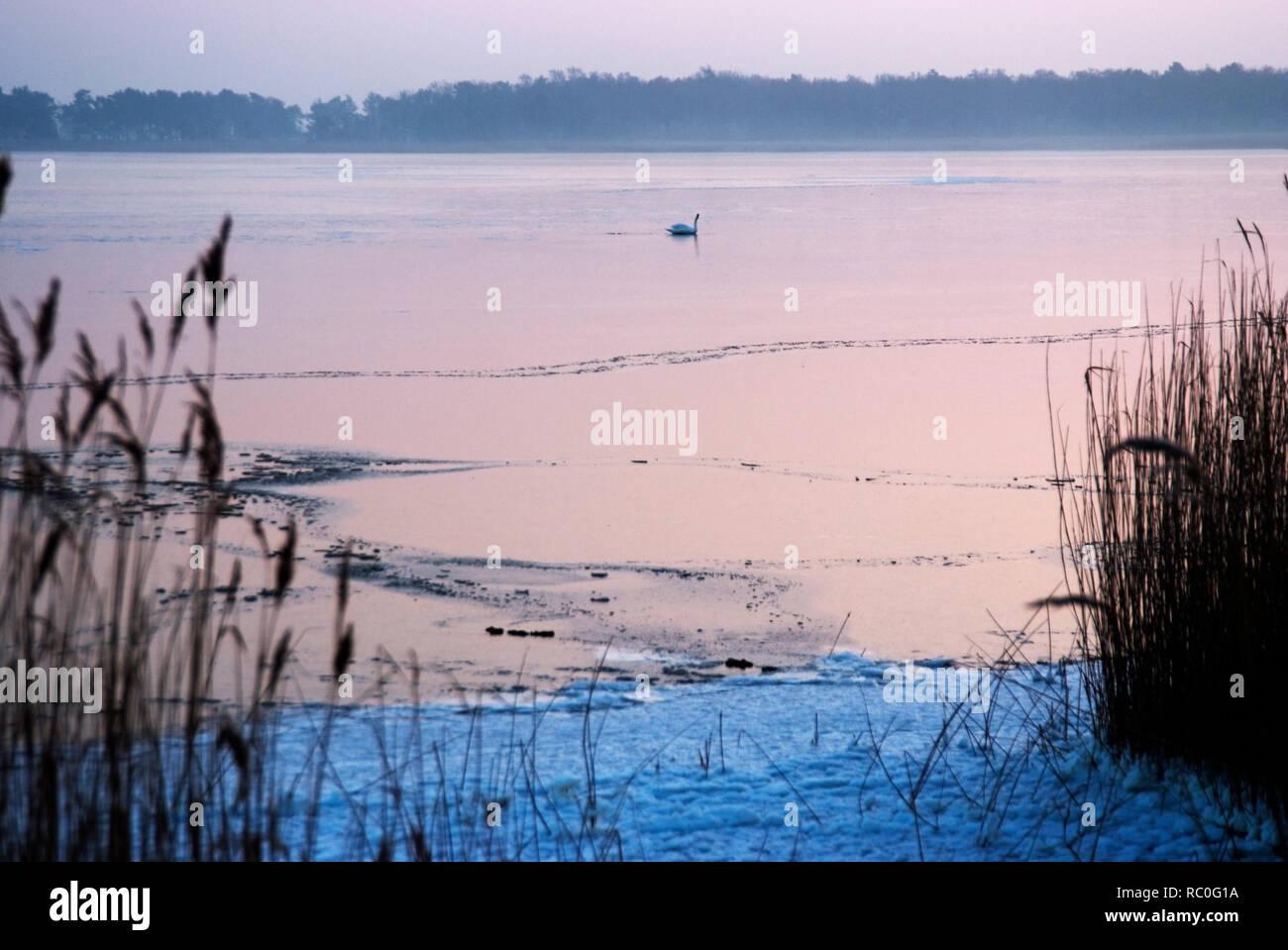 Winterstimmung am Bodden, Born, Darss, Fischland-Darss-Zingst, Mecklenburg-Vorpommern, Deutschland, Europa | painted door in an old captain's house, B - Stock Image